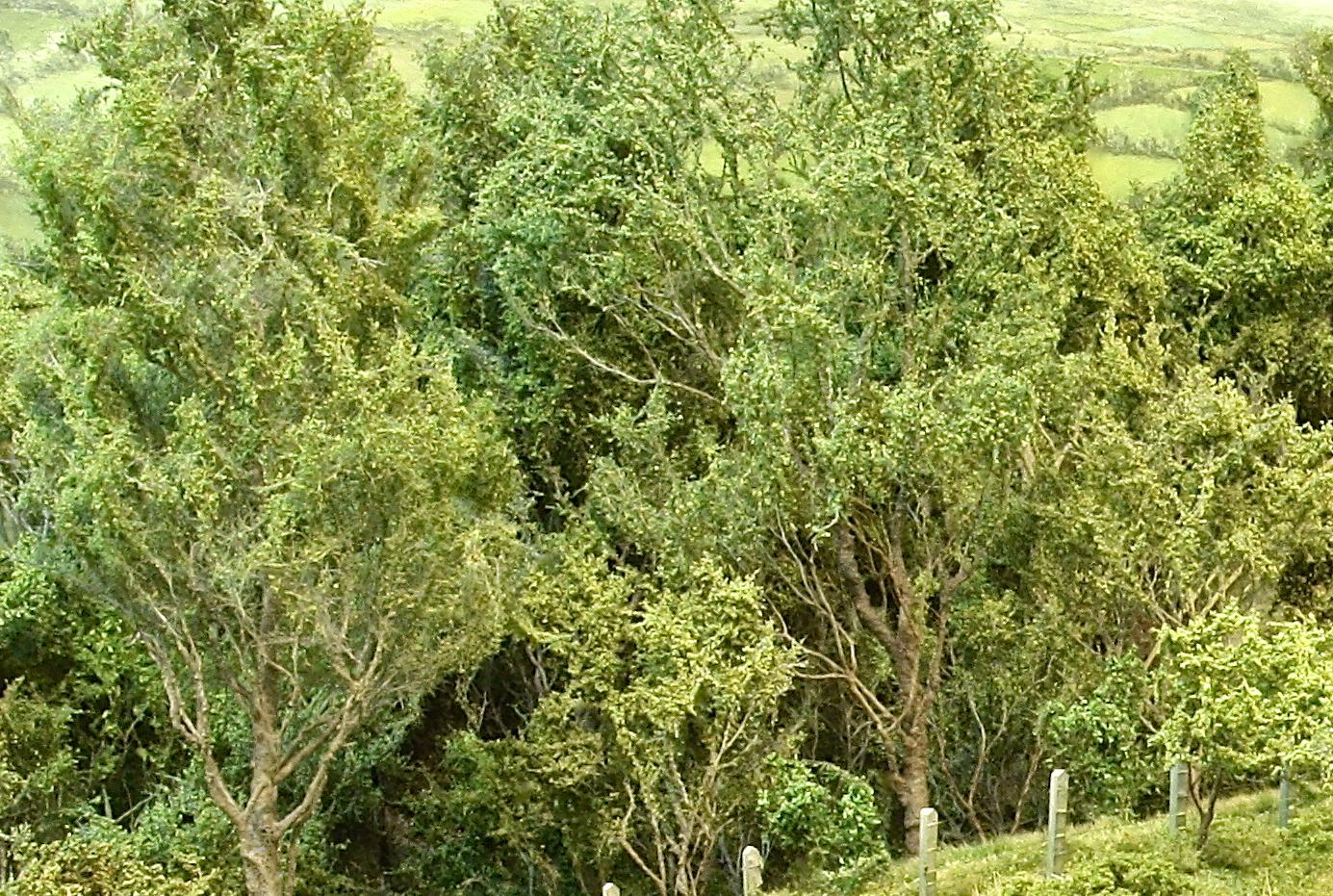 crop tree