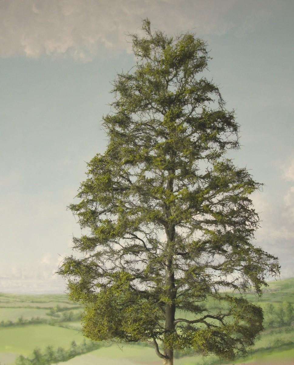 chapt tree
